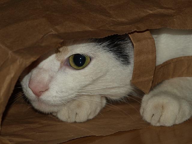 kočka pod taškou
