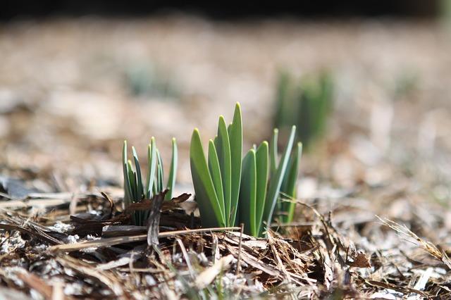 malé rostlinky